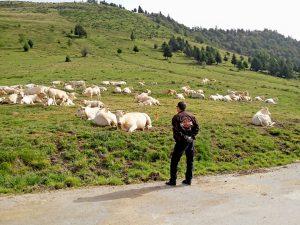 contemplation d'autres montures durant ce voyage moto Pyrénées